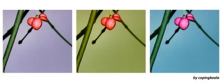 winter flowers 1