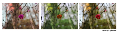 winter flowers 33