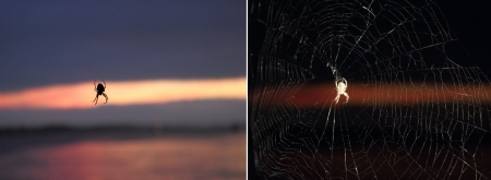 spider with and without flash