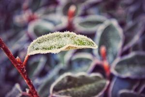 winter plant 1
