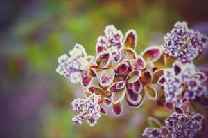 winter plant 2