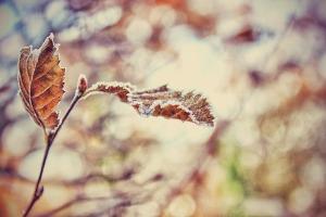 winter plant 3