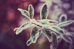 winter plant 4