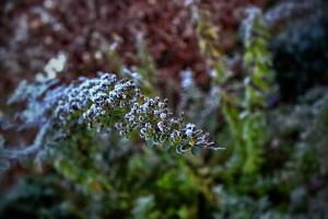 winter plant 5